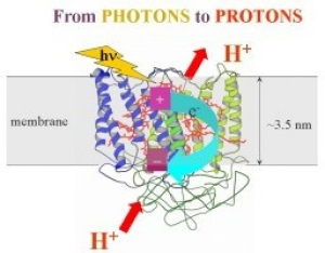 From photons to protons