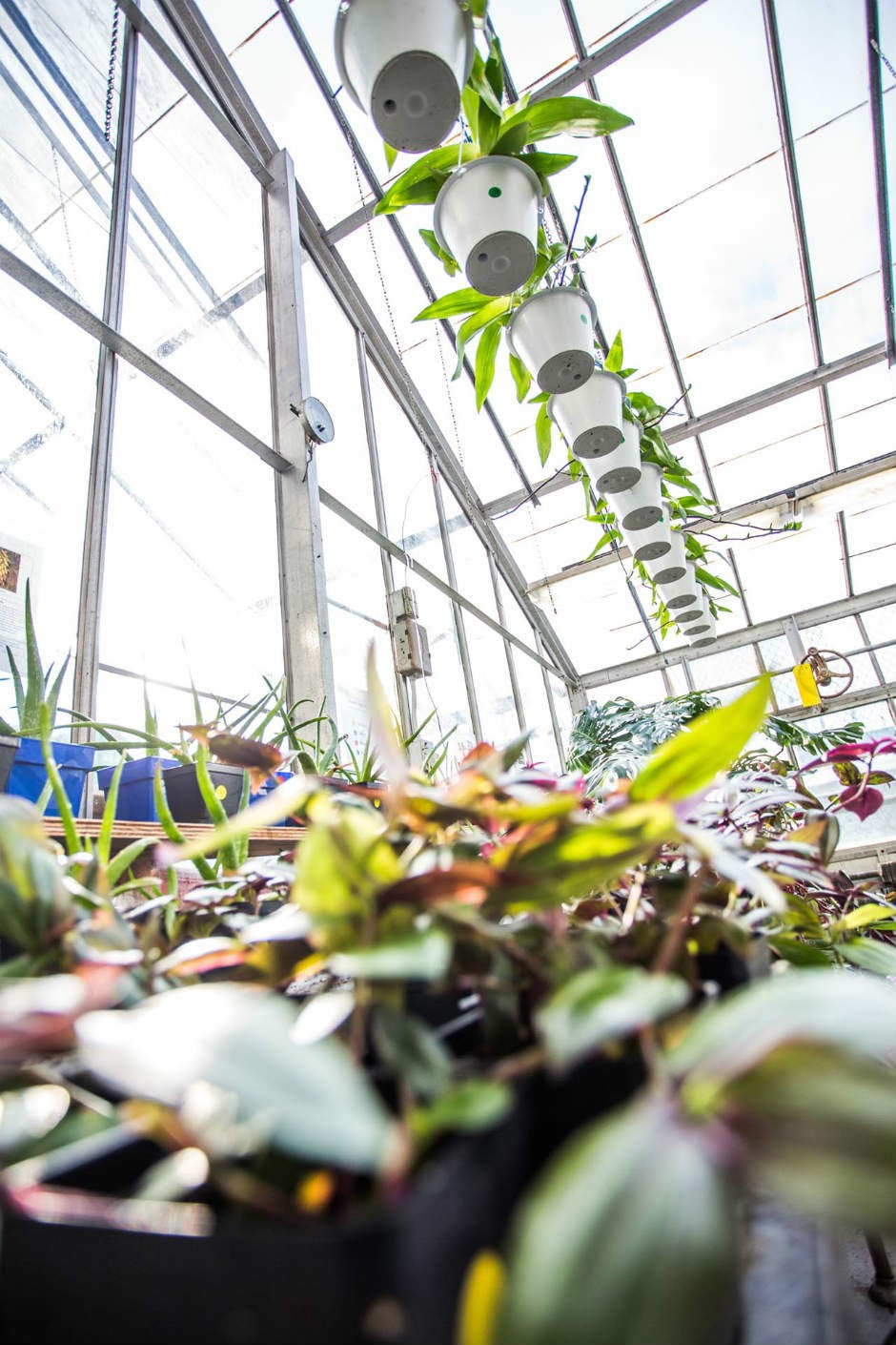 The Concordia University greenhouse is just one in a slew of urban horticulture projects in Montreal.