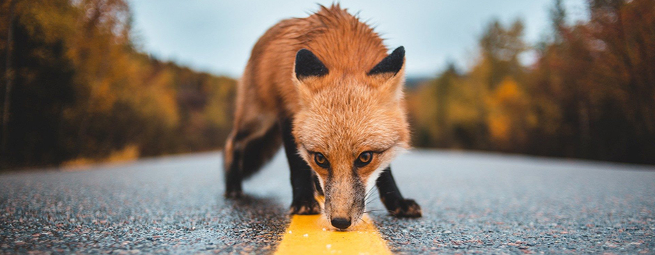 Study looks at ways to cut roadkill numbers for animals