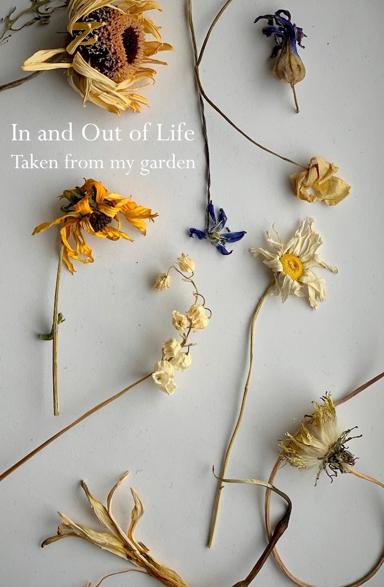 In and Out of Life, Taken from my garden | Works by Aileen Pugliese Castro