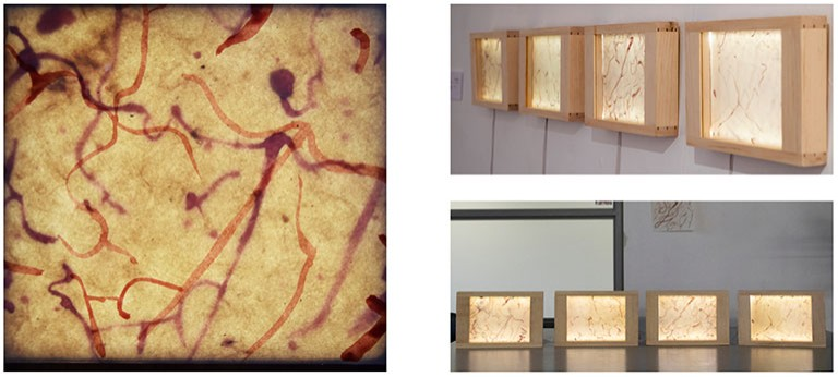 Self Flow: a series of four lightboxes by incoming art therapy student Lily Jiménez-Daboub and neuroscience PhD candidate Liam O'Leary.