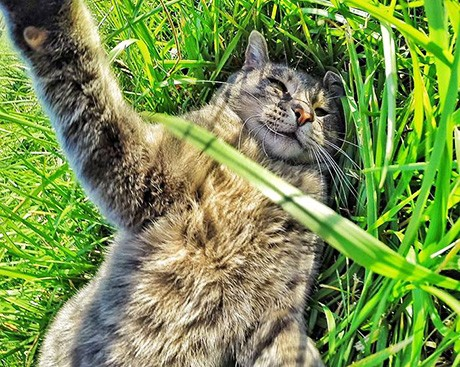 What the cat who takes selfies says about your personality