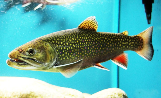"Dylan Fraser: ""Fish teach us to slow down our rate of environmental change."" 