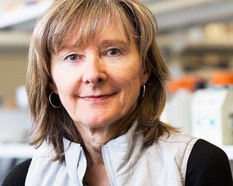 Concordian Ann English is Canada's leading female chemist of 2017