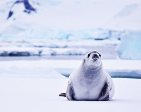NEW RESEARCH: Antarctica's biodiversity is under threat from tourism and climate change