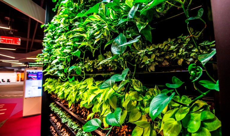 The green walls in the Webster Library. | Photo by Concordia University