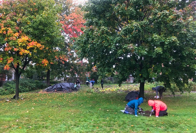 People in raincoats, digging in a grassy field, with autumn leaves and maple trees around.
