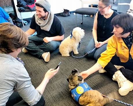 Pet therapy dogs: a calming canine caravan comes to Concordia