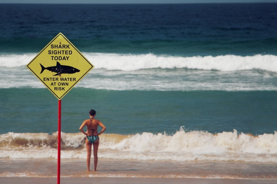 "Sign on beach says, ""Shark sighted today, enter at own risk"""