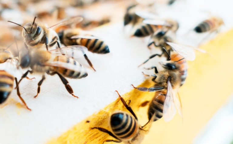 The startup Nectar seeks to use technology to help beekeepers improve honey bee health and the security of our food supply. | Photo by Massimiliano Latella on Unsplash