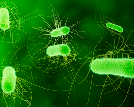 Antibiotics and E. coli: Concordians publish research with major implications for public health