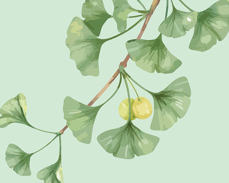 6 plant extracts pair up to slow down aging in yeast — and maybe humans, according to new study