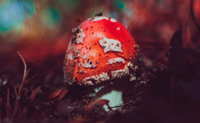 Fine Arts student Miri Chekhanovich's winning research investigates the development of biomaterial using the natural growth process of mushrooms. | Photo by Timothy Dykes on Unsplash