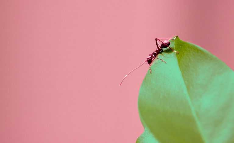 "Jean-Philippe Lessard: ""In the ant world, we really don't have much widespread agreement on which traits would be most useful to measure."" 